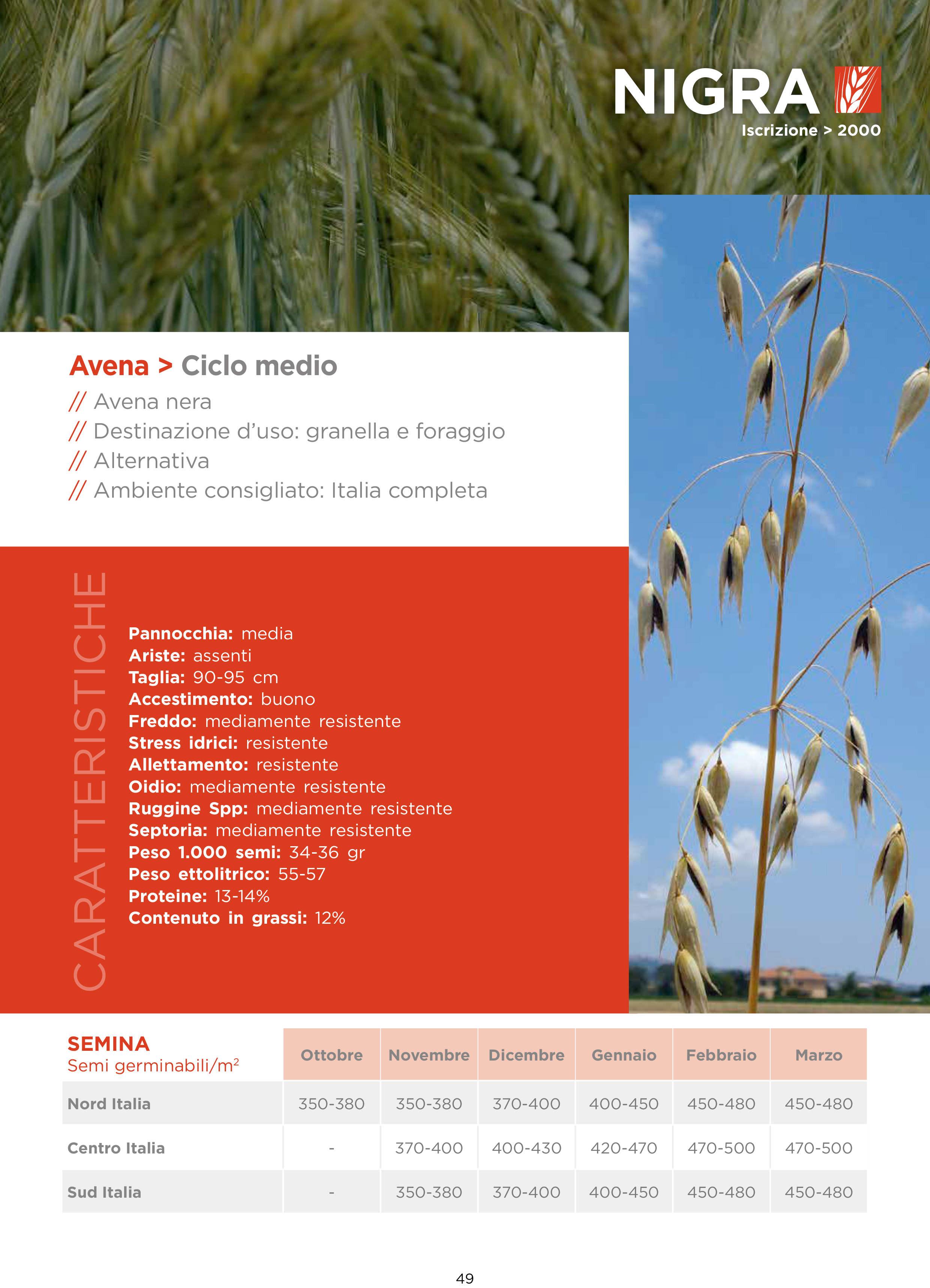 Avena-Nigra